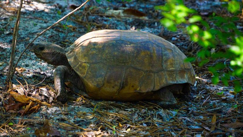 tortue en pleine nature